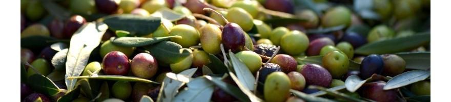 Olive taggiasche in salamoia e denocciolate sott'olio vendita online