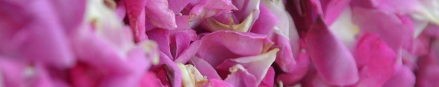 Petali di Rose di Genova